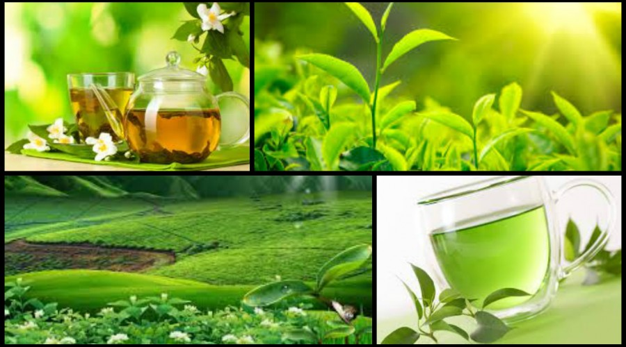 Enjoy a cup of our high quality tea, sourced from lush, green tea plantations all over the world.